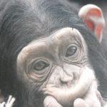 Podsjetnik za učenike - Zoo vrt i Sabor