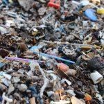 Life in plastic is fantastic