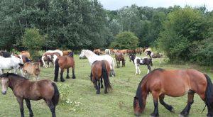 david konji